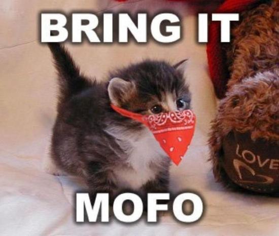 Come+cat+me+bro_8fdca1_3149788