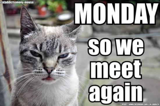 Monday_cat_photie