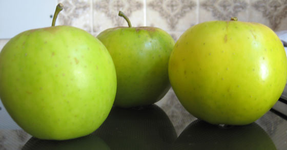 Greensleeve apples picked and eaten in September