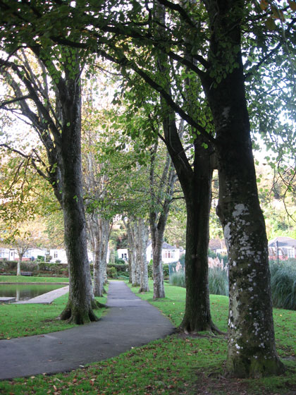 Tree-lined avenue in Bicclescombe Park