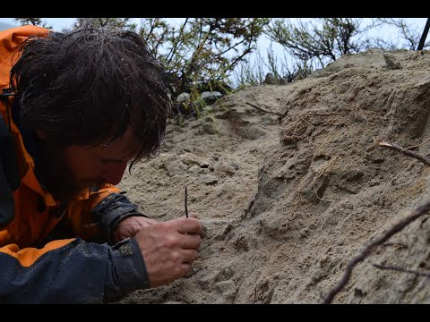 """El Museo de Roca recibirá los huesos del """"nuevo"""" dinosaurio Niebla Antiqua"""