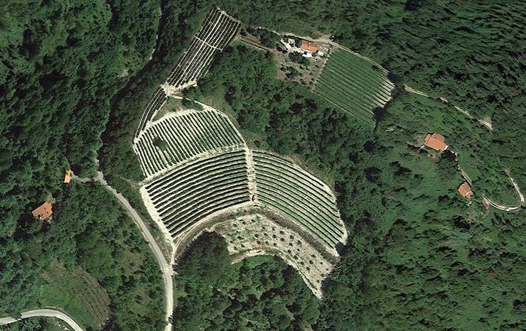 Vigna Montarbio