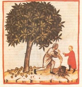 le castagne nell'antichità