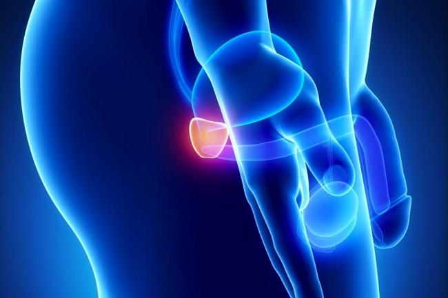 imagen de ubicación de la prostata