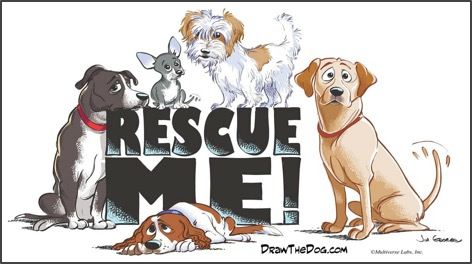 Animal Rescue Organization