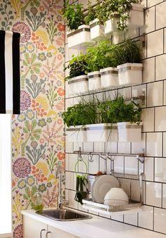 ervas medicinais em apartamento