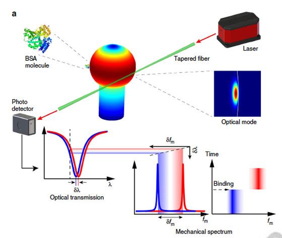Optical spring