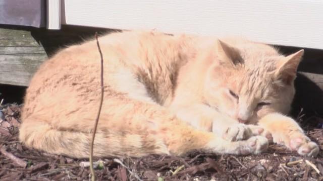 Orange cat from Maryland_1551177131712.jpg.jpg