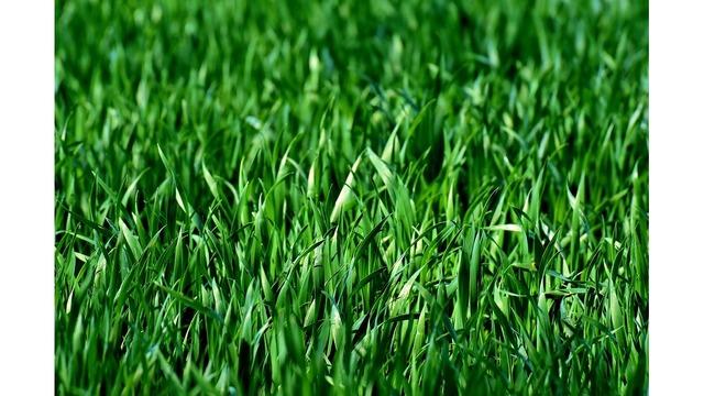 meadow-3375052_960_720_1558123357128_87965318_ver1.0_640_360_1558126743001.jpg