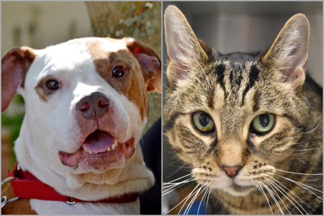 Able (left) and Tori (right) are two of the senior pets available for adoption at Lollypop Farm this month.