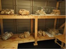 Reinforced Shelves were constructed