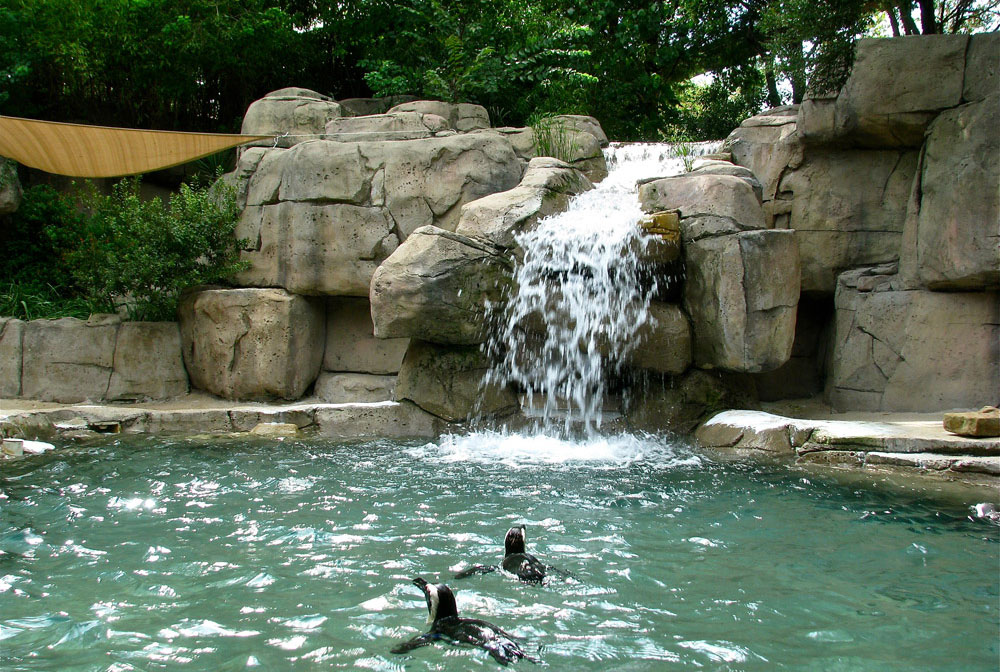 slide-Pinguin-exhibit-Dallas-Zoo