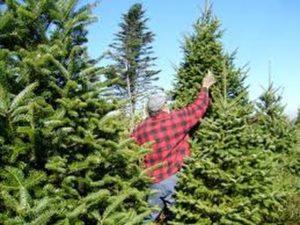 man performing tree cutting service