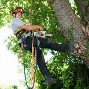 chainsaw tree rockaway