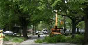 fallen tree emergency
