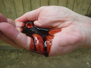 Dragon's Blood Resin in Hand