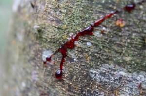 Dragon's Blood_Tree Resin