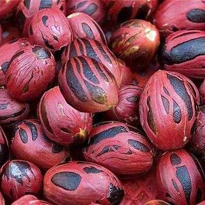 essential oil nutmeg