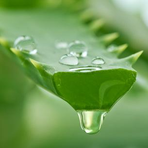Forget Glasses, Improve Your Eyesight With Aloe Vera