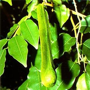 Perulu balsam