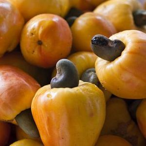 cashew nut oil fruit