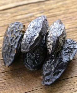 tonka bean absolute 2