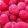 raspberry seed oil 1
