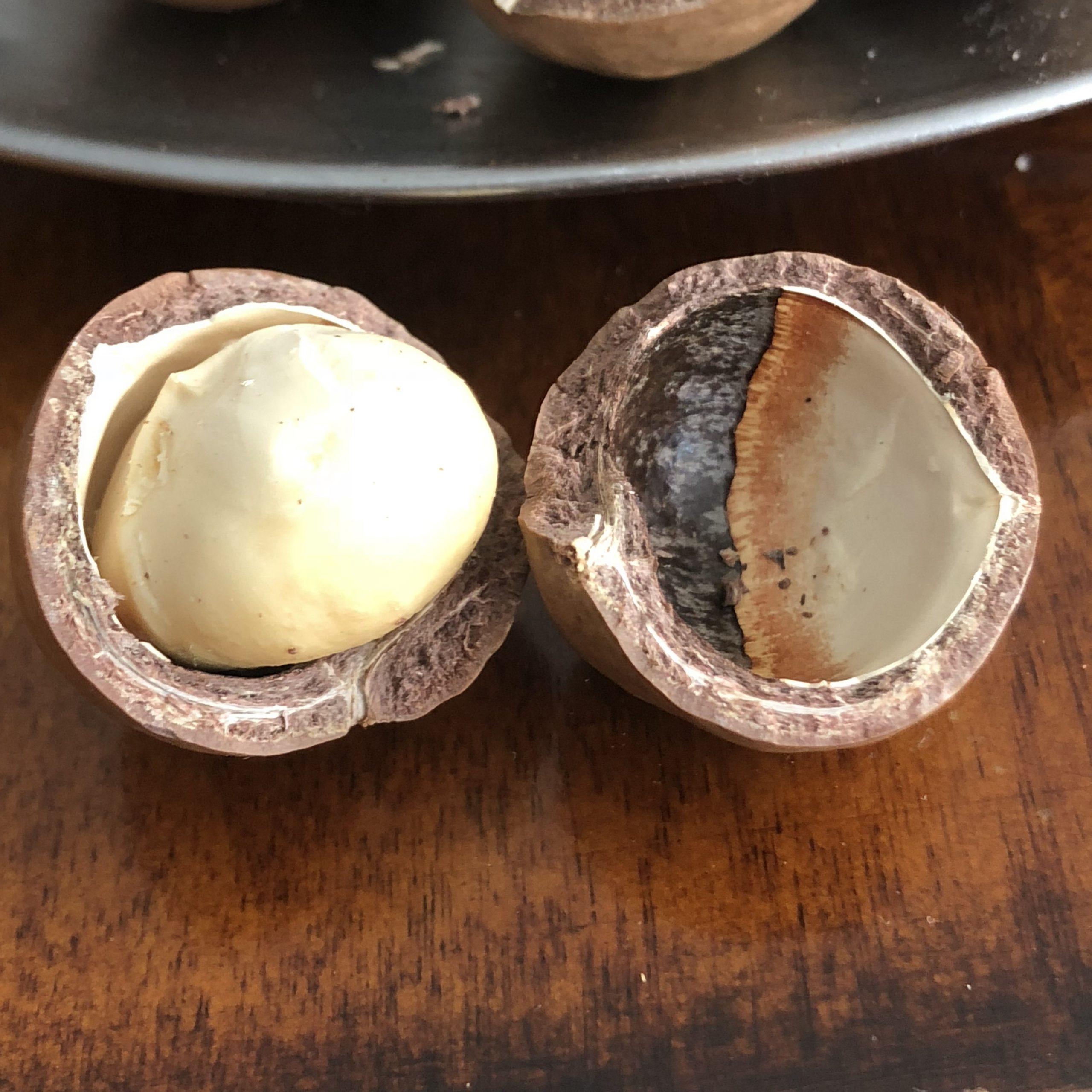 Macadamia nuts 1