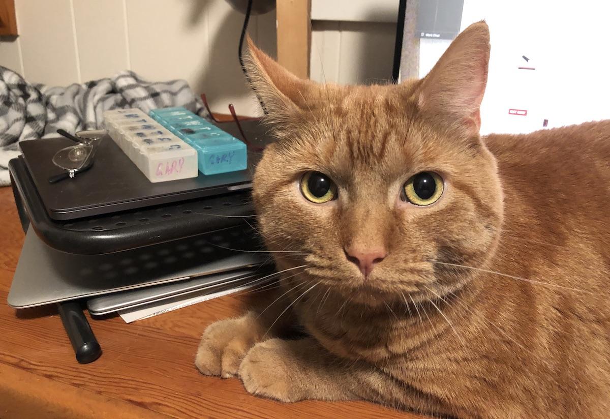 Photo of Max, my cat.