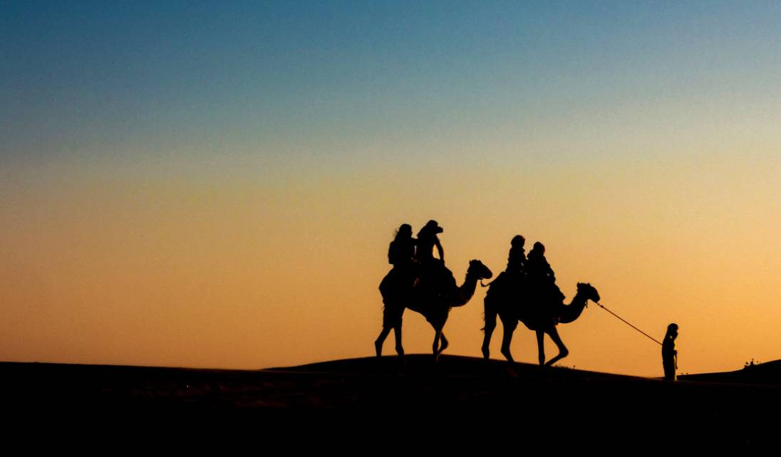 man leading two camels