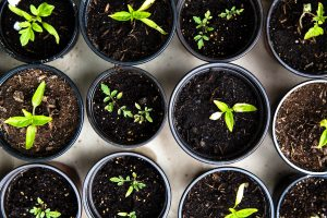 pots of soil