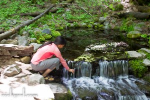 Collecting water from Fern Spring