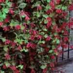 Awesome Fence With Evergreen Plants Landscaping Ideas 82