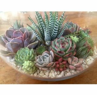 Beauty Succulents for Houseplant Indoor Decorations 17 1