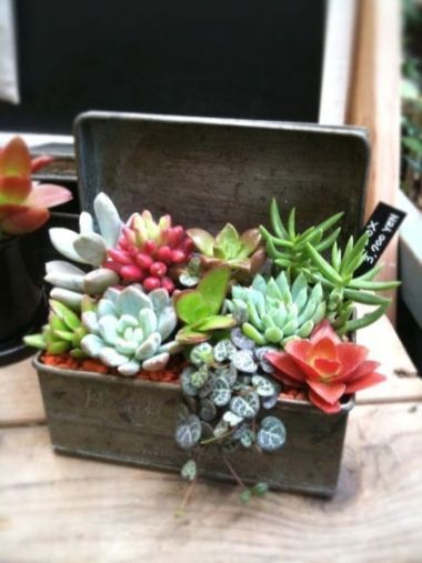 Beauty Succulents for Houseplant Indoor Decorations 19 1