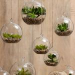 Beauty Succulents for Houseplant Indoor Decorations 4 1