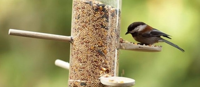 DIY Bird Feeder Ideas Featured