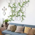 Beautiful Home Plant for Indoor Decorations 1