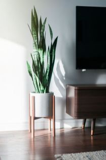 Beautiful Home Plant for Indoor Decorations 14
