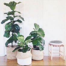 Beautiful Home Plant for Indoor Decorations 17