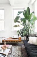 Beautiful Home Plant for Indoor Decorations 21