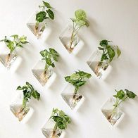 Beautiful Home Plant for Indoor Decorations 3