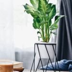 Cool Plant Stand Design Ideas for Indoor Houseplant 28