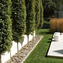 Stunning Privacy Fence Line Landscaping Ideas 11