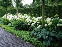 Stunning Privacy Fence Line Landscaping Ideas 21