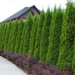 Stunning Privacy Fence Line Landscaping Ideas 57