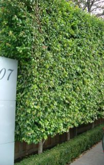 Stunning Privacy Fence Line Landscaping Ideas 8