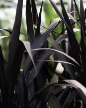 Spooky Plant and Flower Ideas to Make Perfect Goth Garden 10