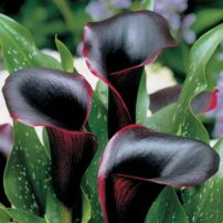 Spooky Plant and Flower Ideas to Make Perfect Goth Garden 31