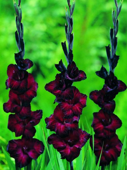 Spooky Plant and Flower Ideas to Make Perfect Goth Garden 38